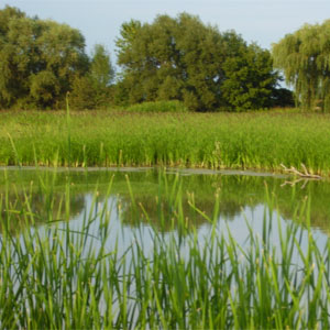 Wetlands & Ecological Assessments