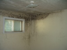 What are the health effects of mold