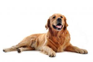 controlling pet odors